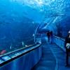A modern large-scale ocean aquarium with international standards